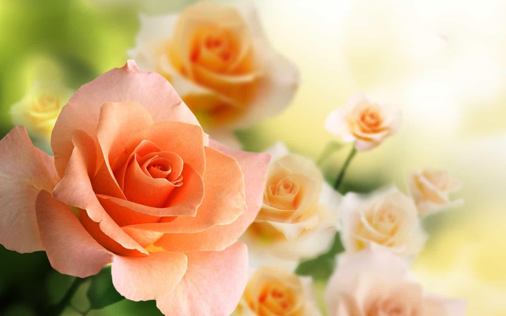 Открытки цветы на телефон